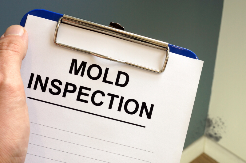 Mold inspection in Potomac
